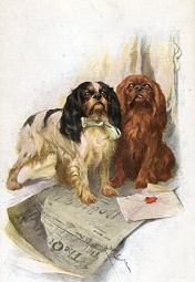 tri ruby old style cavaliers